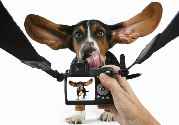 how-to-take-pictures-of-dogs.jpg